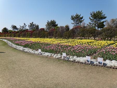 チューリップ祭り 公園内 (2)