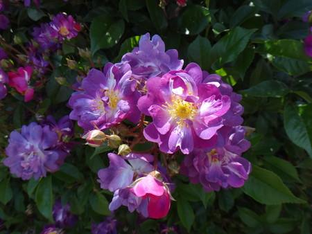13 色も花も実物の方が綺麗