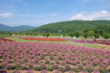 花の都公園 (1)