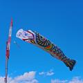 日本一の鯉のぼり3@加須・利根川
