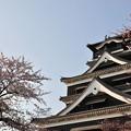 Photos: 名城の春
