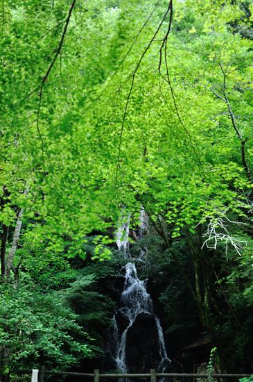 調音の滝(全景)