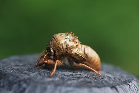 2012.07.22 追分市民の森 空蝉と蟻