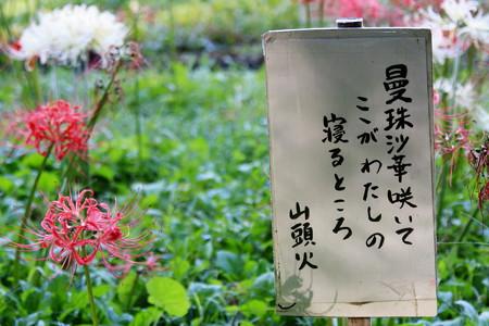 2012.10.08 和泉川 彼岸花横の立札