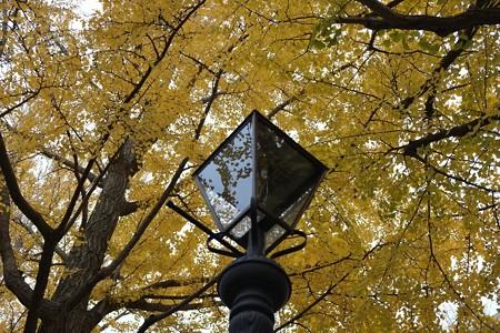 2012.11.30 山下公園通り 銀杏とガス灯