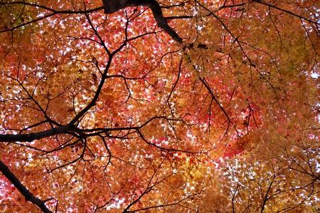 2012.12.01 大池公園 紅葉 樹の下で