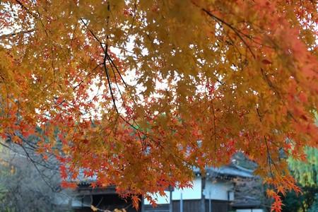2012.12.06 上野 東京国立博物館 法隆寺宝物館から黒門