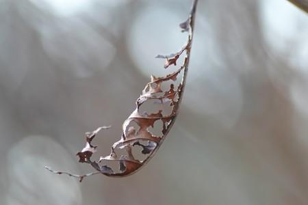 2013.01.22 追分市民の森 小枝の枯葉