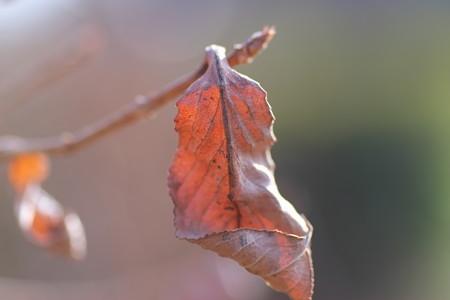 2013.02.07 追分市民の森 枯葉