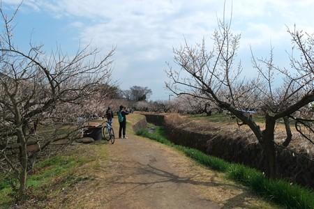 2013.03.02 曽我別所梅林 梅祭り