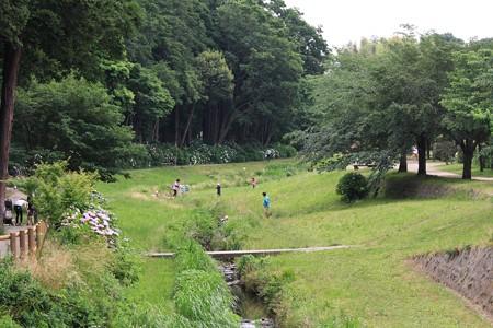 2013.06.06 和泉川 散歩道