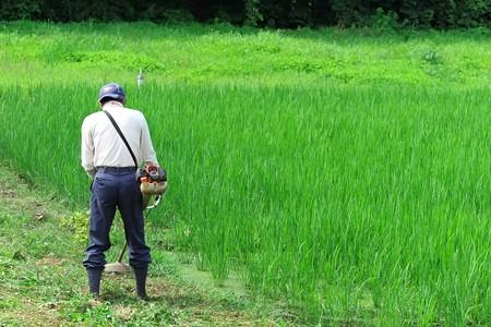 2013.07.21 追分市民の森 畑仕事