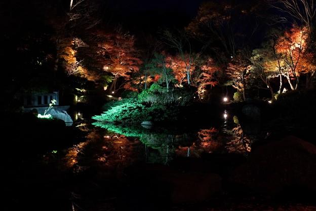 2013.11.29 大磯城山公園 もみじのライトアップ