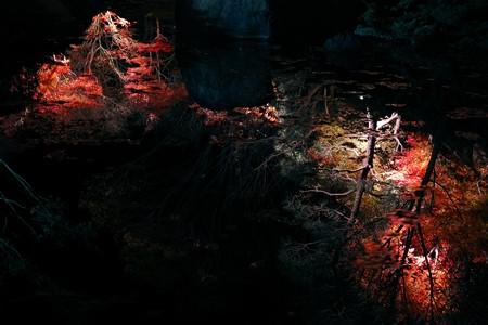 2013.11.29 大磯城山公園 不動池