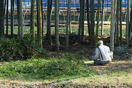 2013.12.05 和泉川 竹林作業