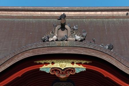2014.01.22 鎌倉 鶴岡八幡宮 舞殿にハト