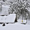 写真: 五箇山的冬雪