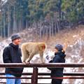写真: Snow Monkey