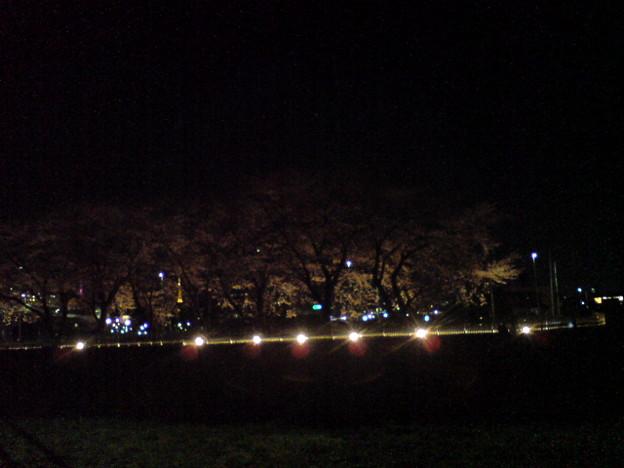 フォト蔵太白区 笊川の桜並木。地下...アルバム: Twitter (748)写真データフォト蔵ツイート