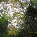 Photos: 20121011 石鎚山 紅葉