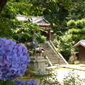 Photos: 日吉神社の紫陽花