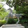 Photos: 日吉神社の馬の像