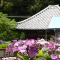 Photos: 熊野古道 地蔵峰寺 紫陽花