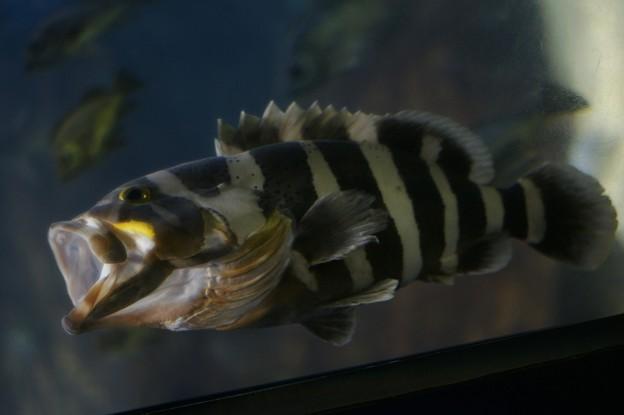 鯉のぼり?