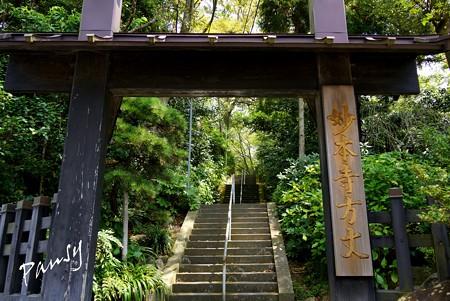 木染月の妙本寺・・1