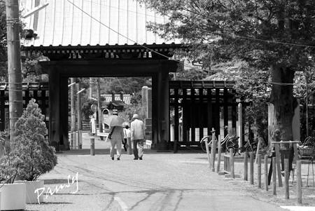 木染月の妙本寺・・2