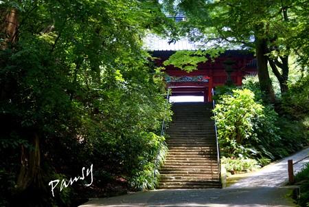 木染月の妙本寺・・3