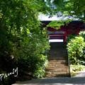 写真: 木染月の妙本寺・・3