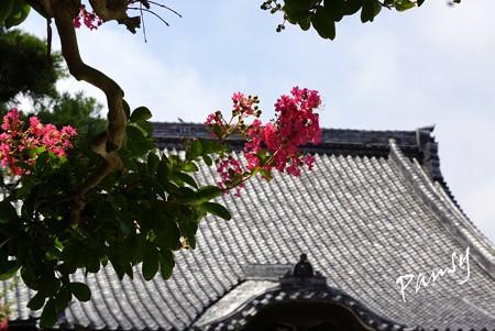 百日紅咲く寺院・・1