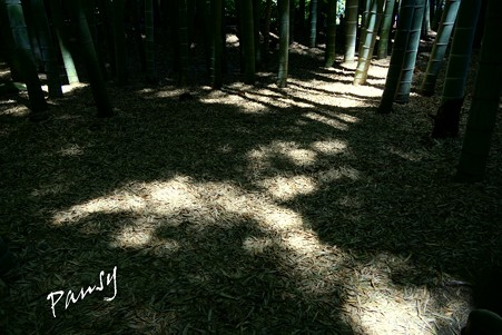 木洩れ日・・竹林・・6