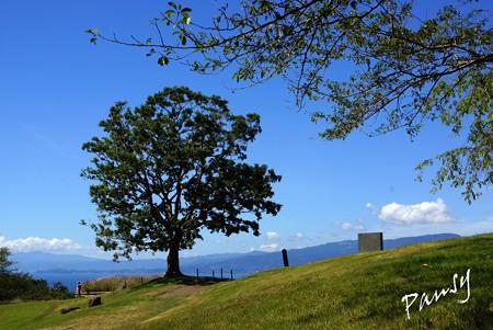 大きな樹のある風景・・