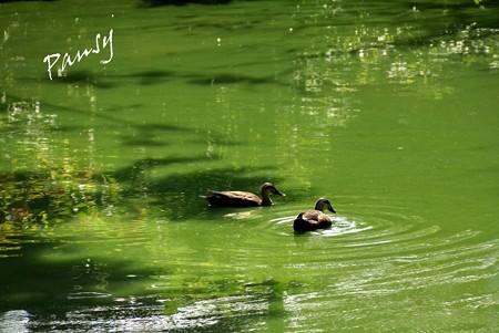 翡翠いろの池・・2