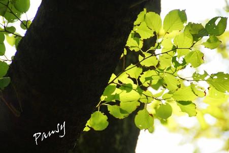 長月の緑・・
