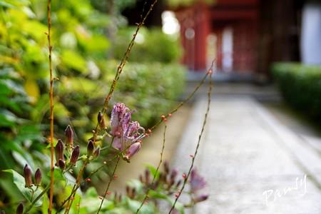 妙心寺 退蔵院 23