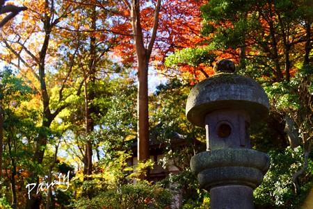 箱根の紅葉 039