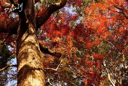 鎌倉宮神苑・・2