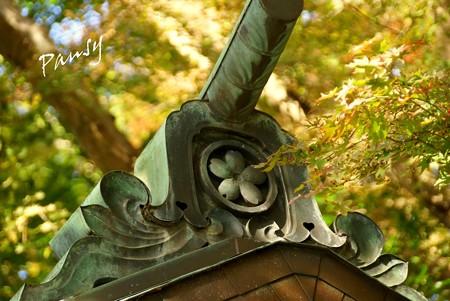 桜の御紋・・鎌倉宮神苑・・4