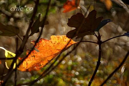 冬の葉・・2