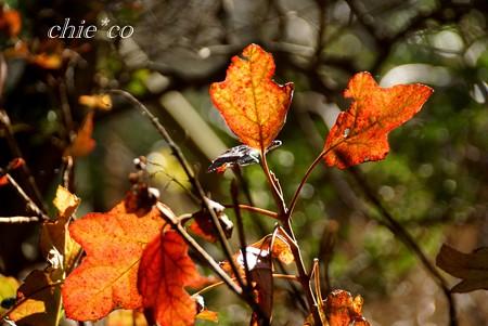 冬の葉・・3