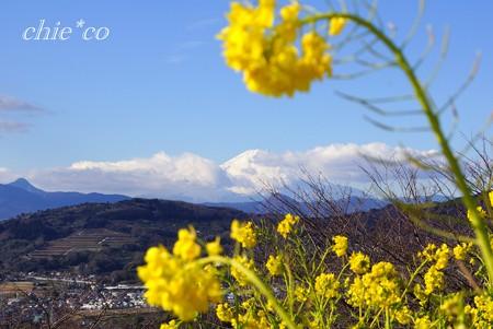 菜の花の向こうの富士山・・
