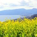 写真: 海と・・菜の花と・・