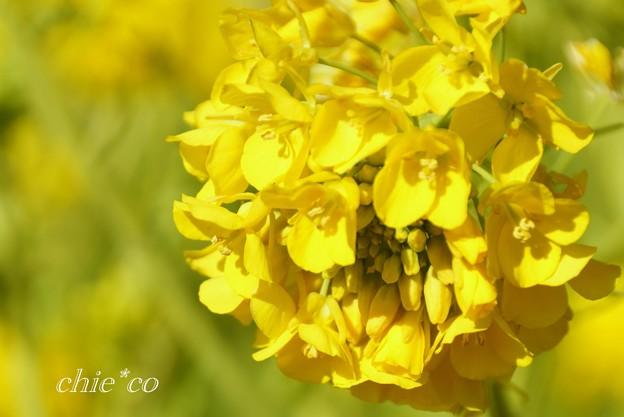 写真: 花球・・