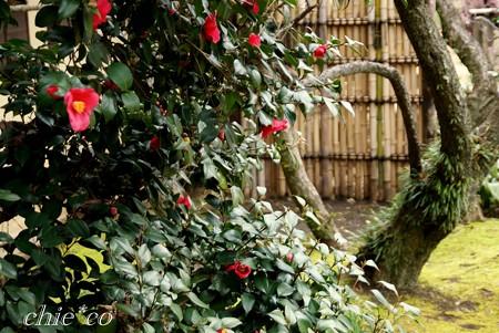 椿咲く庭・・