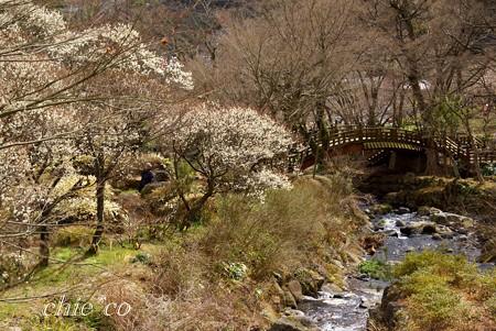 梅の樹と・・小川のある風景・・