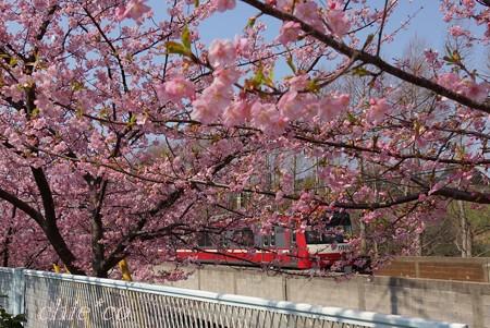 河津桜~三浦海岸~ 068