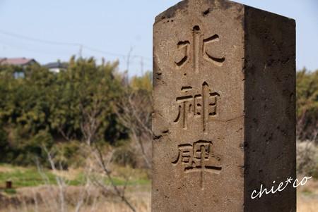 河津桜~三浦海岸~ 175